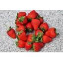 BIO jahody 1.jakost 250g (Bioaspa Kúty)