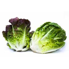 Salát little gem zelený 2 ks balené (IPZ Farma Ráječek)