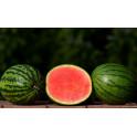 Meloun vodní - půlka (Znojemsko)